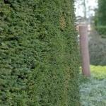 Een vruchtbare tuin met gezonde planten?