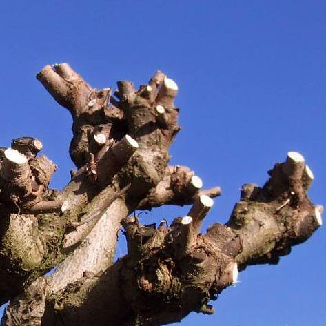 boompjes op stam voor in huis
