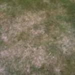 Het gazon na een sneeuwrijke winter