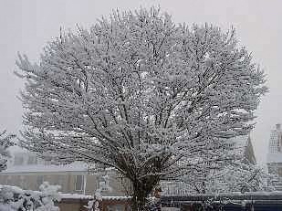 Een winterse kroon is prachtig!
